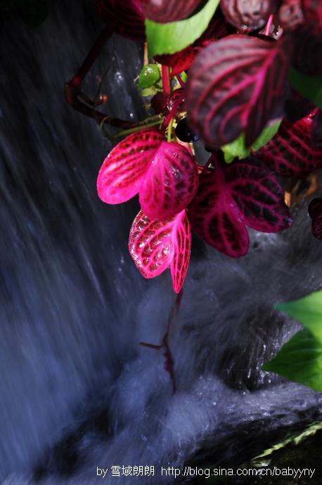 过的地方充满了灵气-荷花乡坝派巨泉 蕉林鲜翠茂密长泉水叮咚入盈图片
