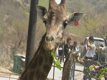 八达岭野生动物园简介