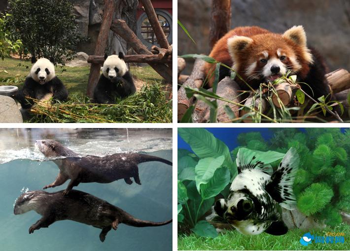动物天地」为海洋公园全新发展计画当中第一项完成之主要景点区,香港