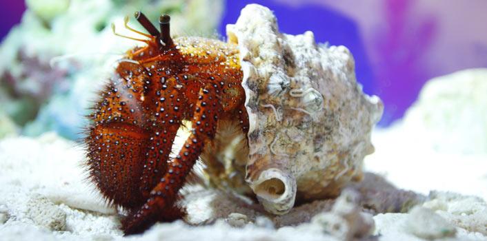 上海长风海洋世界举行了一场珍稀虾蟹特展,二十几种罕见虾蟹集体