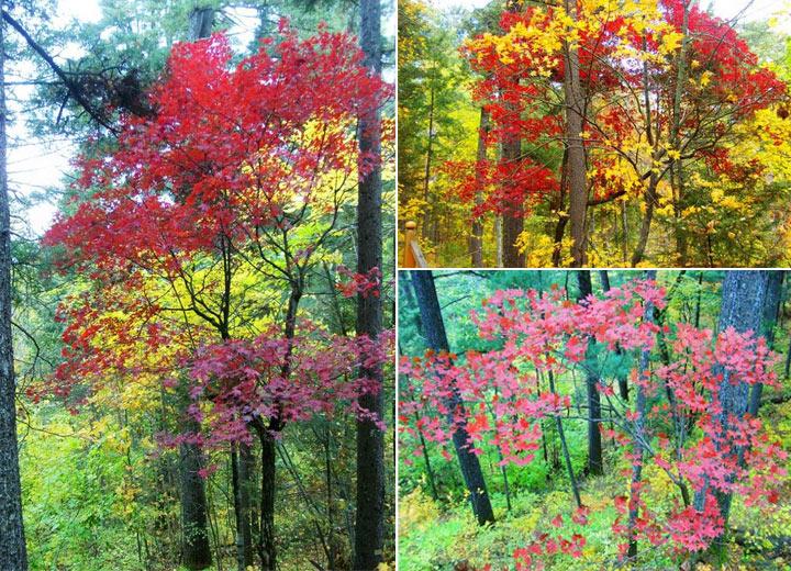 五营国家森林公园绿野仙居景区