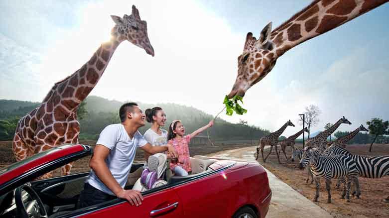 杭州野生动物园攻略_杭州动物园_杭州野生动物园_杭州动物园地址