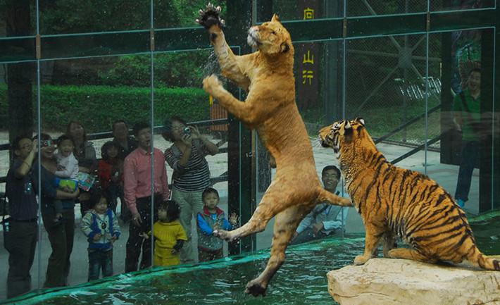 深圳野生动物园景点门票预订价格