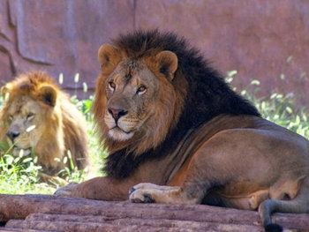 无锡动物园 图片