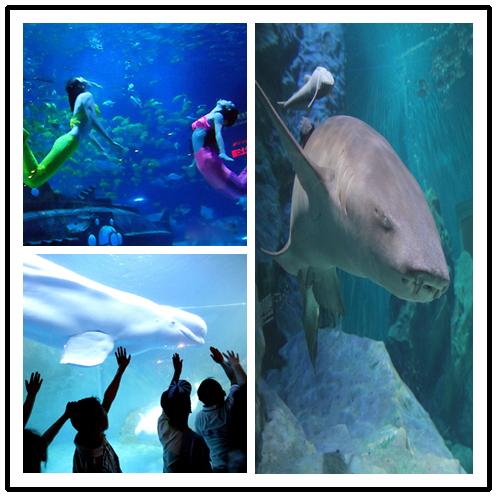 海洋动物展示,海底世界美人鱼表演